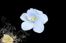 Orchidea cukorvirág -fehér